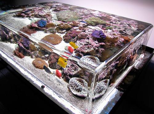 zeroedge-aquarium